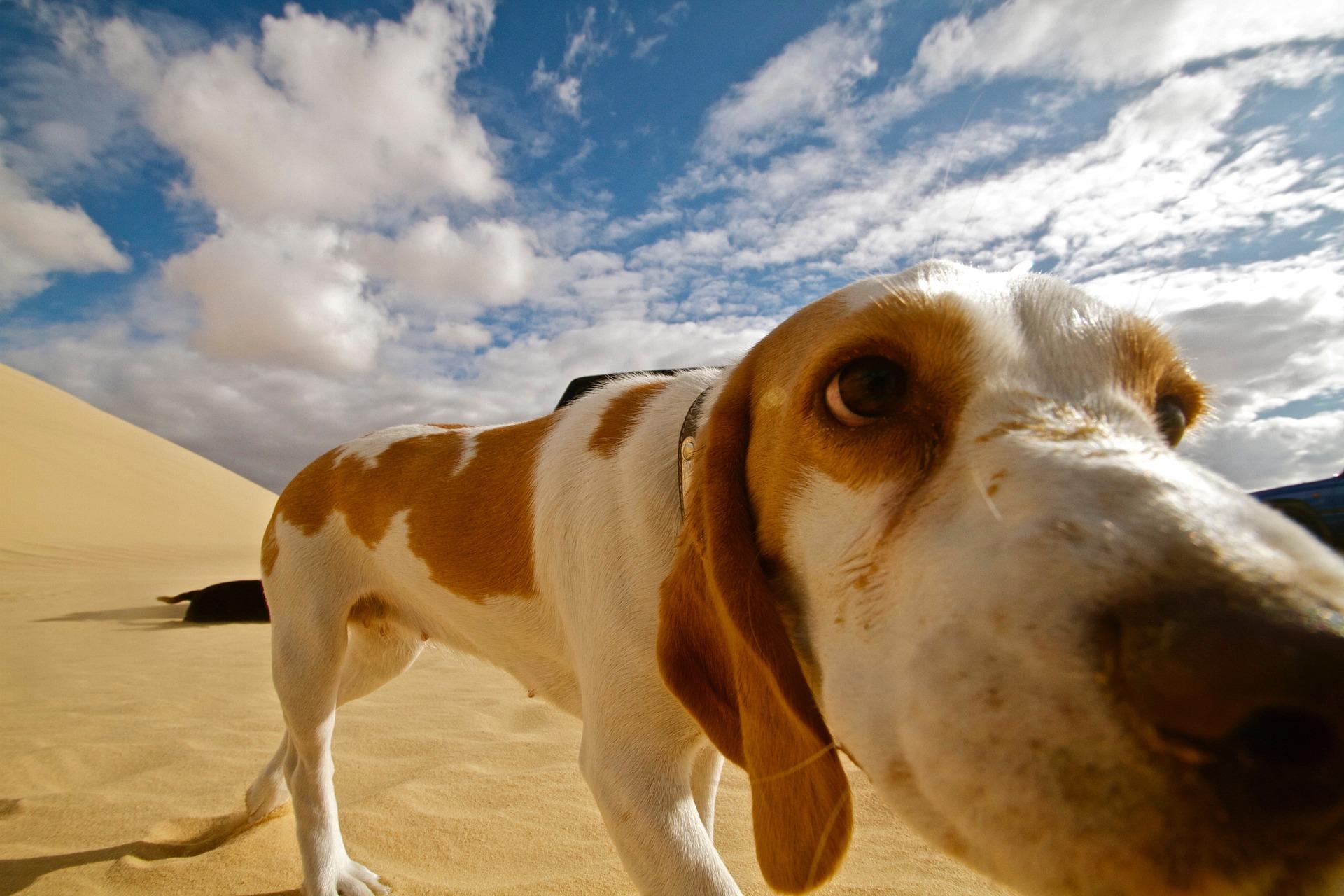 Best Dog-Friendly Getaway Destinations!