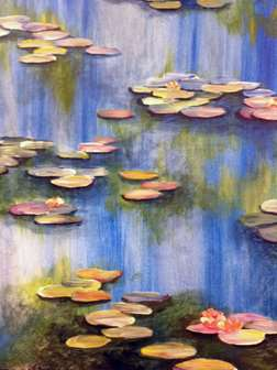 Water Lilies at Morning